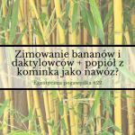 Zimowanie bananów i daktylowców + popiół z kominka jako nawóz?   Egzotyczna Pogawędka #22