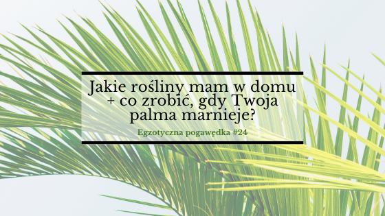 Jakie rośliny mam w domu + co zrobić, gdy Twoja palma marnieje? | Egzotyczna Pogawędka #24