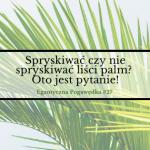 Spryskiwać czy nie spryskiwać liści palm? Oto jest pytanie!    Egzotyczna Pogawędka #27
