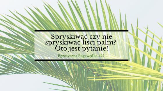 Spryskiwać czy nie spryskiwać liści palm? Oto jest pytanie! |  Egzotyczna Pogawędka #27