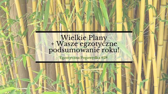 Wielkie Plany + Wasze egzotyczne podsumowanie roku! | Egzotyczna Pogawędka #28