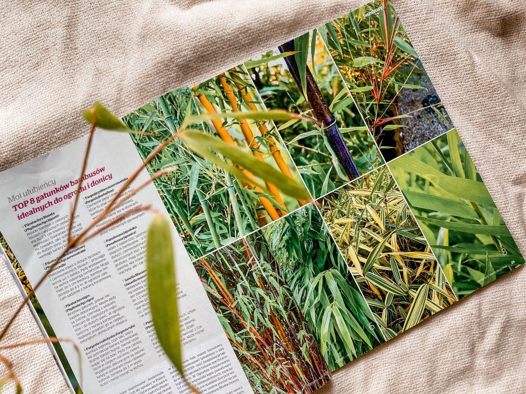 gatunki bambusów do ogrodu Gardener's World