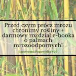Przed czym prócz mrozu chronimy rośliny + darmowy rozdział e-booka o palmach mrozoodpornych  | Egzotyczna Pogawędka #29