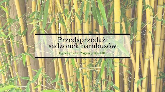 Przedsprzedaż sadzonek bambusów + aktualne prace nad e-bookiem o palmach | Egzotyczna Pogawędka #31