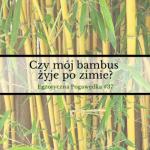 Czy mój bambus żyje po zimie? | Egzotyczna Pogawędka #37