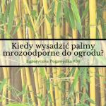 Kiedy wysadzić palmy mrozoodporne do ogrodu? | Egzotyczna Pogawędka #36
