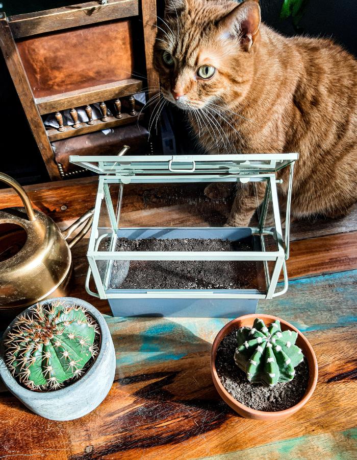 wysiew kaktusów z nasion