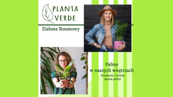 Zielone rozmowy, czyli live z Planta Verde o uprawie palm doniczkowych