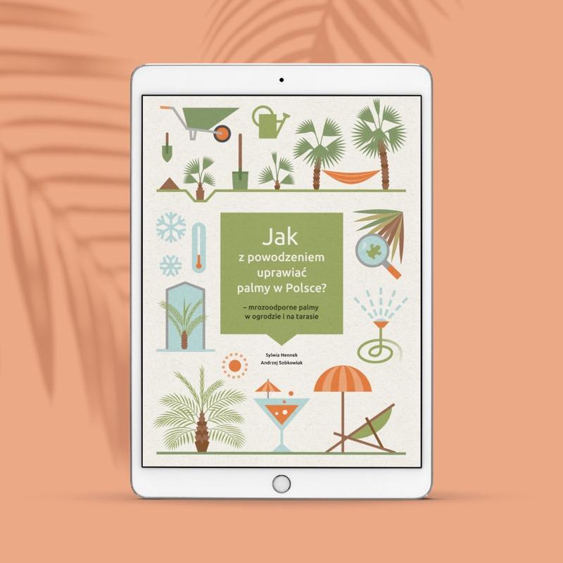 Jak z powodzeniem uprawiać palmy mrozoodporne - mrozoodporne palmy w ogrodzie i na tarasie