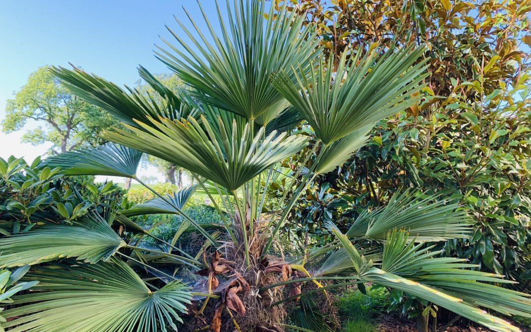 10 pytań, na które znajdziesz odpowiedzi w e-booku o palmach mrozoodpornych